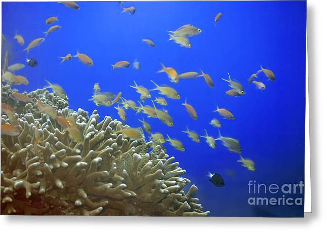 Scuba Diving Greeting Cards - Underwater landscape Greeting Card by MotHaiBaPhoto Prints