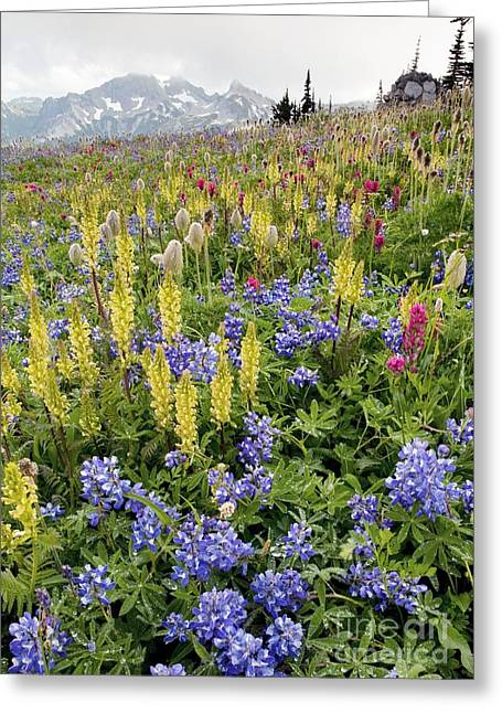 Mazama Greeting Cards - Wildflower Meadow Greeting Card by Bob Gibbons