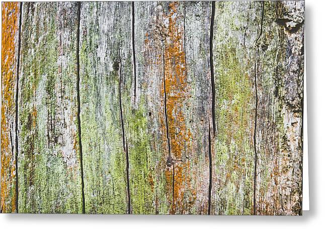 Colourful Bark Greeting Cards - Wood background Greeting Card by Tom Gowanlock