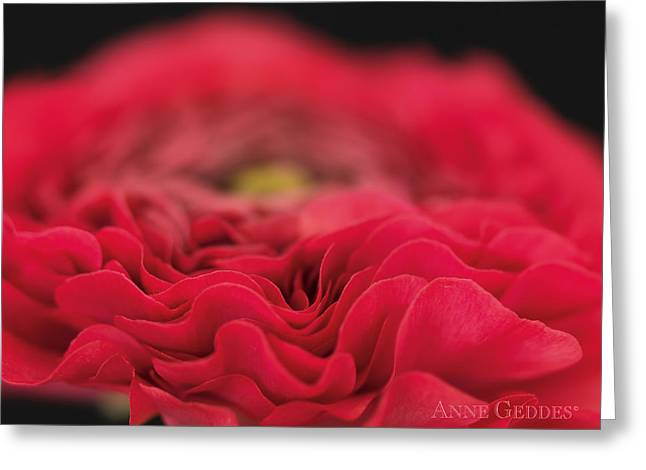Red Flowers Greeting Cards - Untitled Greeting Card by Anne Geddes