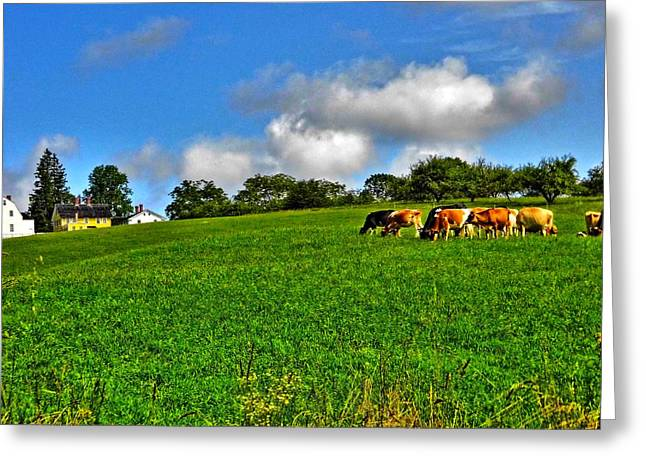New England Village Greeting Cards - 1726 Shaker Village Cattle Greeting Card by Naturally NH
