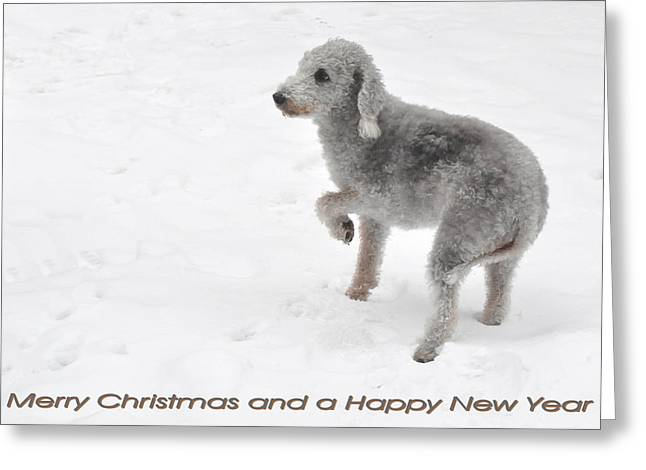 Dogs In Snow. Greeting Cards - 173 Christmas Card - Dog In The Snow Greeting Card by Patrick King