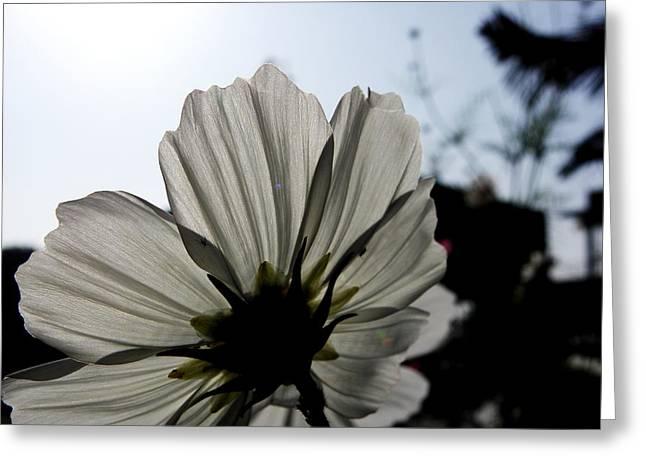 Loveflowers Greeting Card by Baljit Chadha