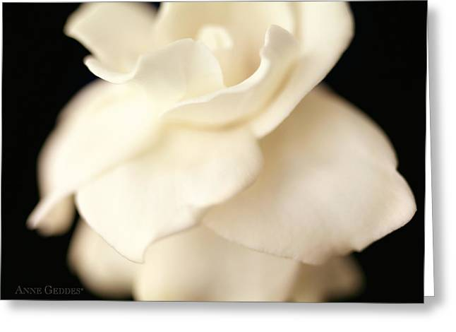 Gardenia Greeting Cards - Untitled Greeting Card by Anne Geddes