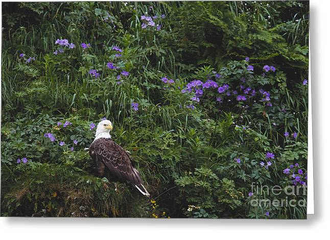 Eagle In Clouds Greeting Cards - Bald Eagle Greeting Card by Art Wolfe