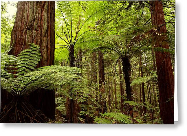 Daytime Greeting Cards - Forest Greeting Card by Les Cunliffe