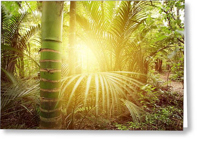 Scenic Woodlands Greeting Cards - Forest light Greeting Card by Les Cunliffe