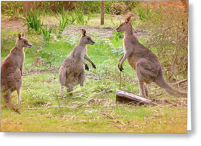 Forest Pyrography Greeting Cards - Kangaroo Greeting Card by Girish J