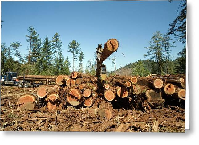 Logging Redwood Trees Greeting Card by Jim West