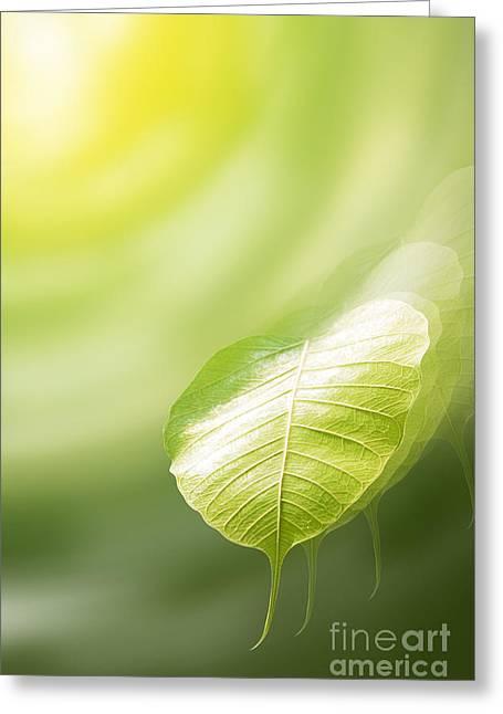 Fantacy Greeting Cards - Pho Or Bodhi Greeting Card by Atiketta Sangasaeng