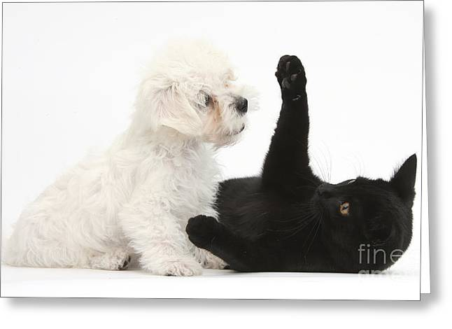 House Pet Greeting Cards - Puppy And Kitten Greeting Card by Mark Taylor