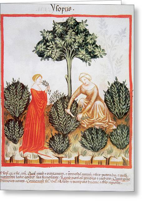 Tacuinum Sanitatis, Medieval Health Greeting Card by Prisma Archivo