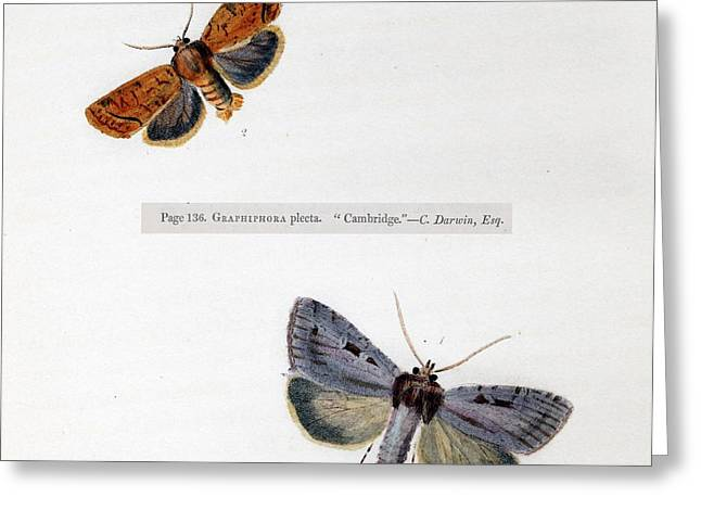 1829 Charles Darwin First Published Work Greeting Card by Paul D Stewart