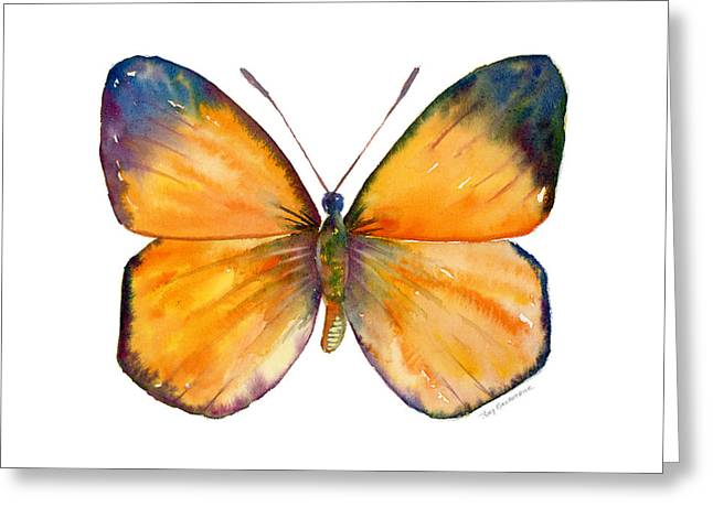 White Background Greeting Cards - 19 Delias Anuna Butterfly Greeting Card by Amy Kirkpatrick