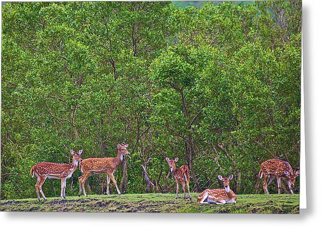 India, West Bengal, Sunderbans National Greeting Card by Connie Bransilver