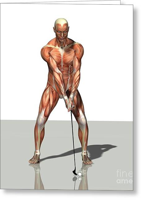 Playing Golf Greeting Cards - Male Muscles, Artwork Greeting Card by Friedrich Saurer