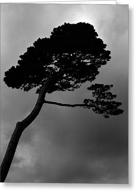 Tree Art Greeting Cards - Untitled Greeting Card by Didier Gaillard