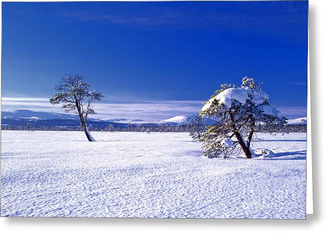 Wintry Greeting Cards - Winter landscape Greeting Card by IB Photo