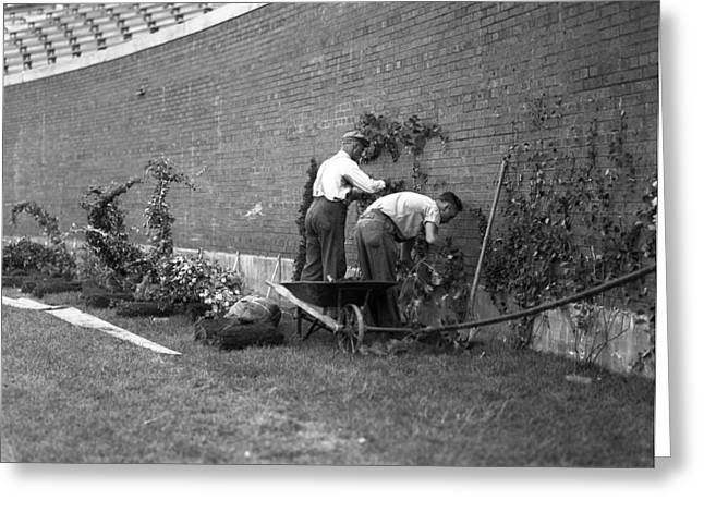 1937 Planting Of The Ivy At Wrigley Field Greeting Card by Retro Images Archive