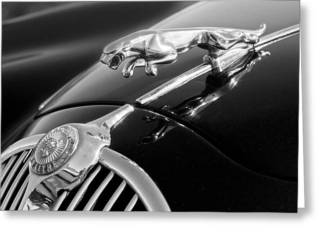 Saloons Greeting Cards - 1964 Jaguar MK2 Saloon Hood Ornament and Emblem Greeting Card by Jill Reger