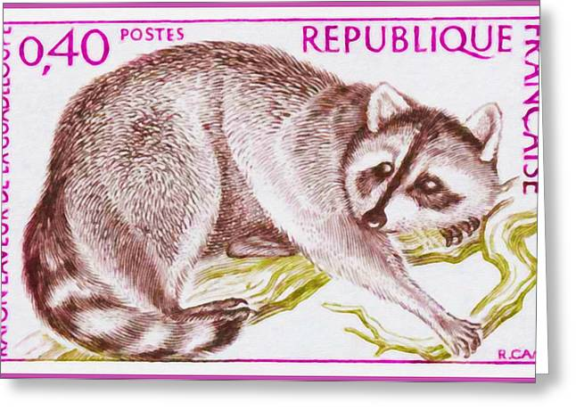 Branch Greeting Cards - 1973 Raccoon Of Guadeloupe Greeting Card by Lanjee Chee