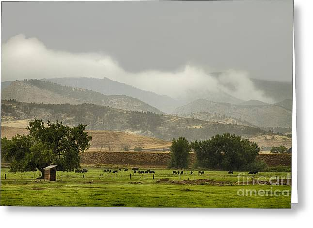 Gifts Greeting Cards - 1st Day of Rain Great Colorado Flood Greeting Card by James BO  Insogna