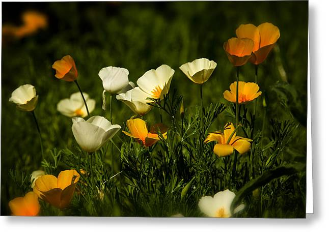 White Photographs Greeting Cards - A Bouquet of Poppies  Greeting Card by Saija  Lehtonen