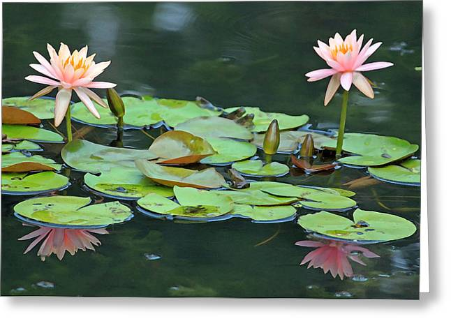 A Day At The Lily Pond Greeting Card by Suzanne Gaff