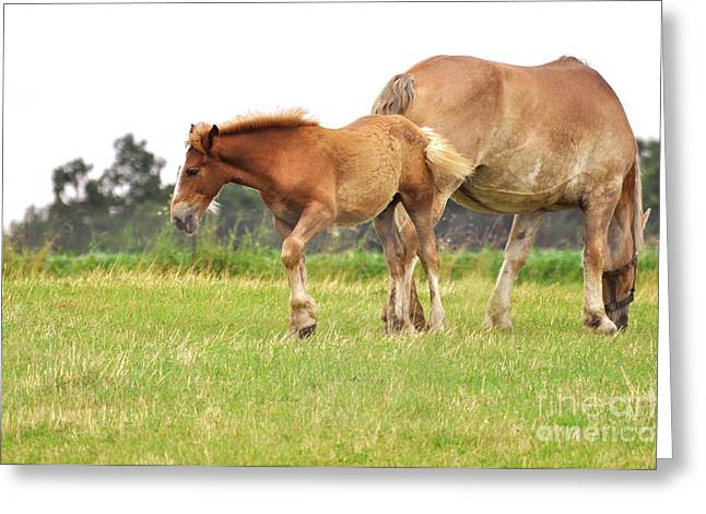 Amish Photographs Greeting Cards - A Mare and her Colt Greeting Card by Penny Neimiller