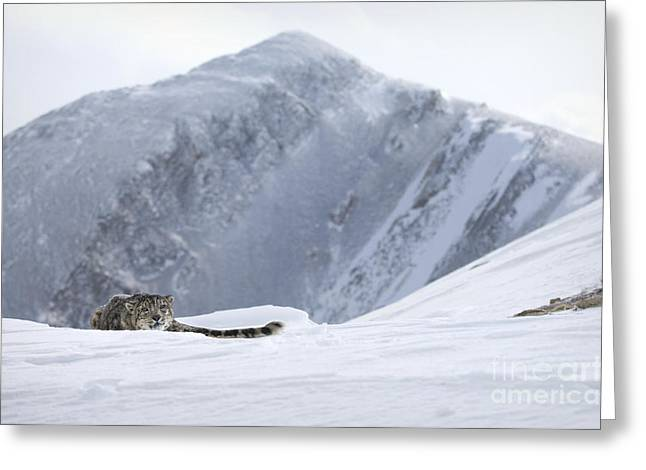Absolute Solitude Greeting Card by Wildlife Fine Art
