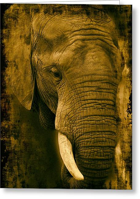 Analog Greeting Cards - African Elephant Greeting Card by Mountain Dreams