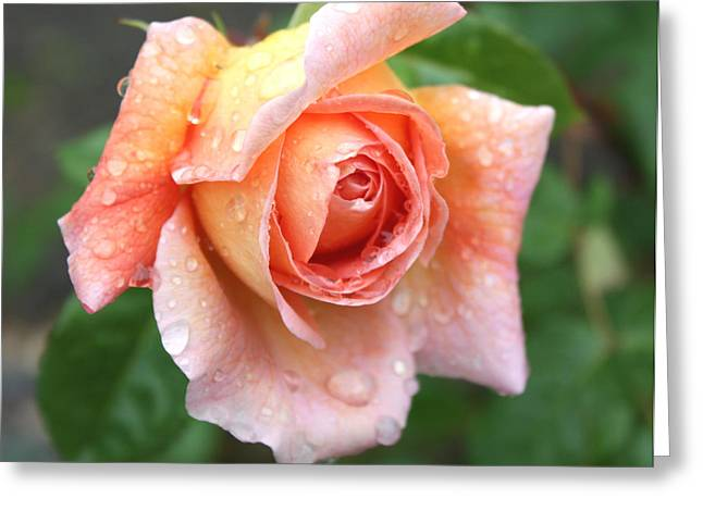 Pictures Of Oregon Greeting Cards - After the Rain Greeting Card by Cathie Tyler