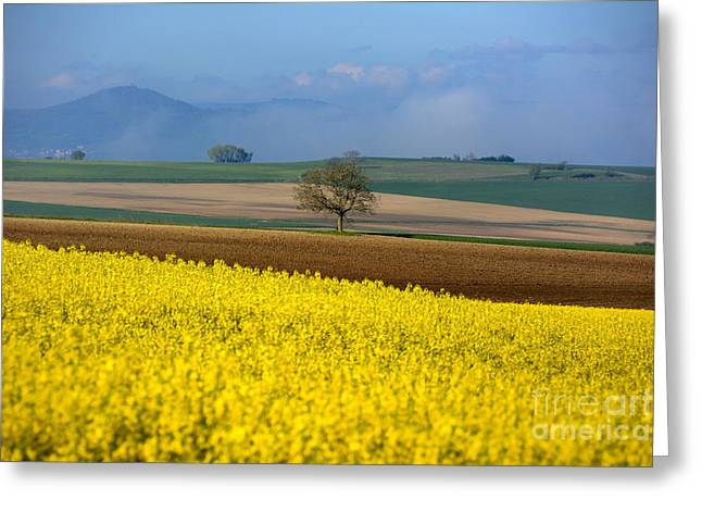 Single Tree Greeting Cards - Agricultural landscape. Auvergne. France. Greeting Card by Bernard Jaubert