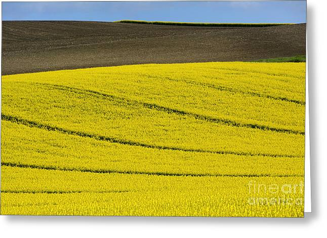 Plowing Field Greeting Cards - Agricultural landscape.  Greeting Card by Bernard Jaubert