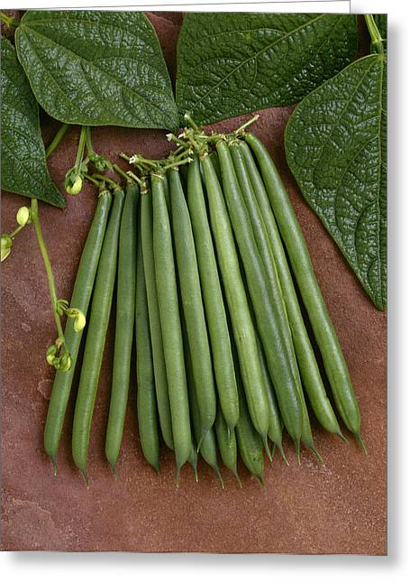Green Beans Greeting Cards - Agriculture - Green Beans On Stone Greeting Card by Ed Young