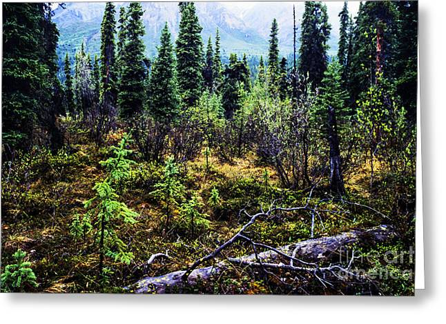 Fly In Greeting Cards - Alaska Mountain Range Wilderness Greeting Card by Thomas R Fletcher