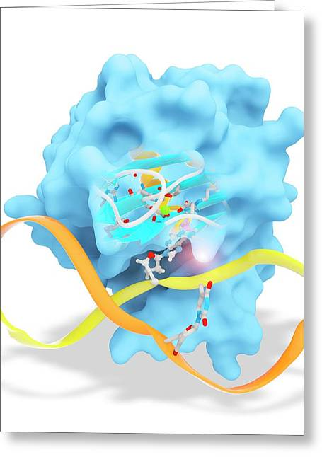 Alkb In Complex With 1-methyl Adenine Greeting Card by Ramon Andrade 3dciencia