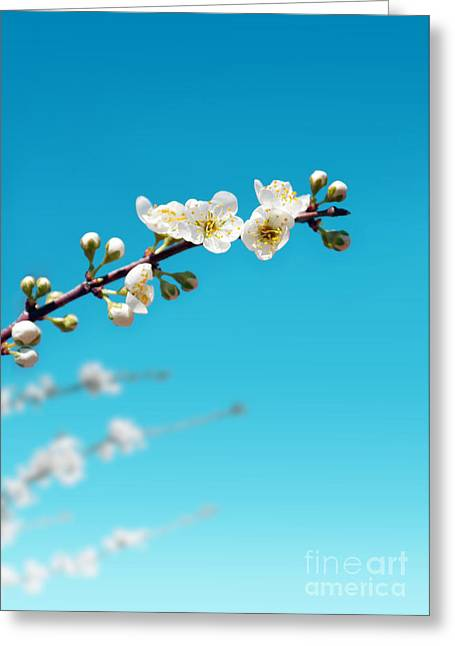 Close Up Floral Greeting Cards - Almond Branch Greeting Card by Carlos Caetano