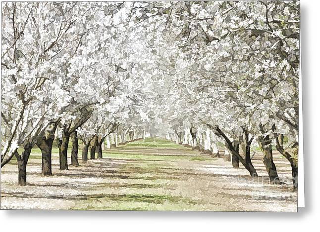 Csu Greeting Cards - Almond Orchard Greeting Card by Kathleen Gauthier