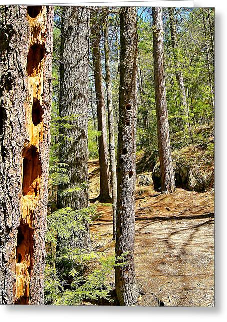 Sunset Greeting Cards Greeting Cards - Along the trail at Daves Falls Amberg Wisconsin Greeting Card by Carol Toepke