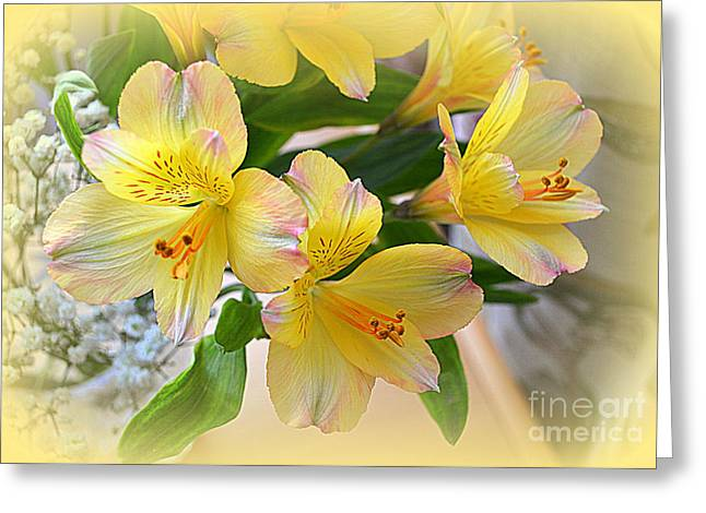 Lily Of The Incas Greeting Cards - Alstroemeria Greeting Card by Bishopston Fine Art