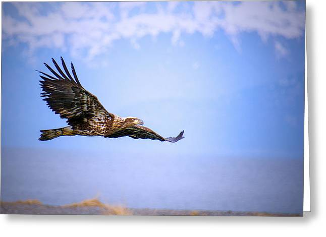 Amazing Bald Eagle Greeting Card by Debra  Miller