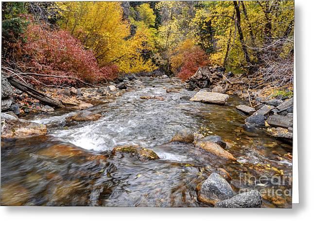 Mountain Fork Creek Greeting Cards - American Fork Canyon Creek in Autumn - Utah Greeting Card by Gary Whitton
