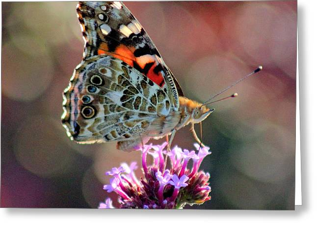 Sunlight On Flowers Greeting Cards - American Painted Lady Butterfly Square Greeting Card by Karen Adams