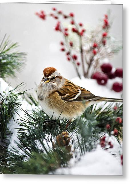 Red Bird In Snow Greeting Cards - American Tree Sparrow Greeting Card by Christina Rollo
