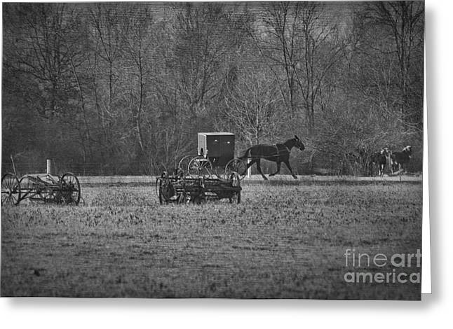Amish Photographs Greeting Cards - Amish Buggy Black and White Greeting Card by David Arment