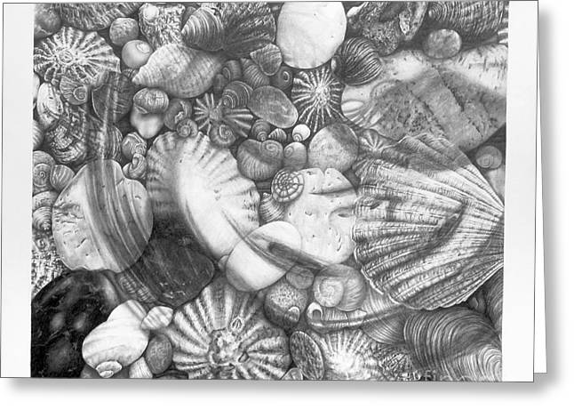 Sea Shell Drawings Greeting Cards - Anamorphic Memory in the Silhouette of Reminiscence II Greeting Card by Sarah Sutherland