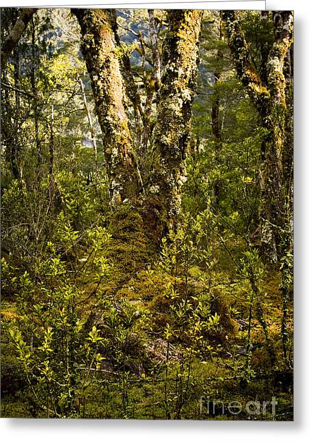 Ancient Woods Greeting Card by Tim Hester