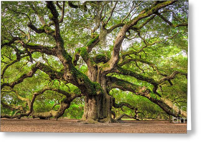 Charleston Greeting Cards - Angel Oak Tree of Life Greeting Card by Dustin K Ryan