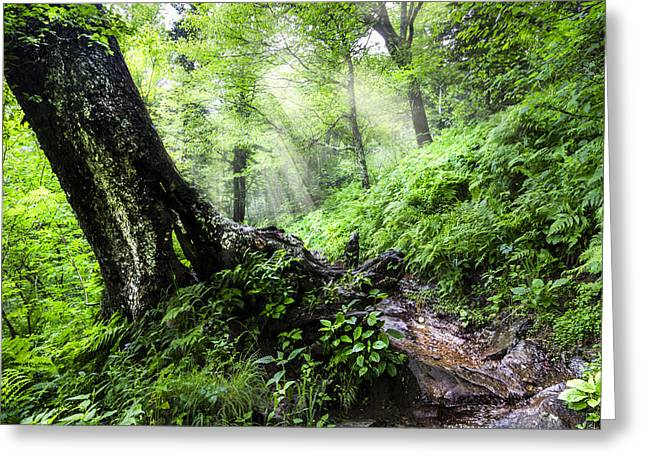 Canyon Country Greeting Cards - Appalachian Trail Greeting Card by Debra and Dave Vanderlaan